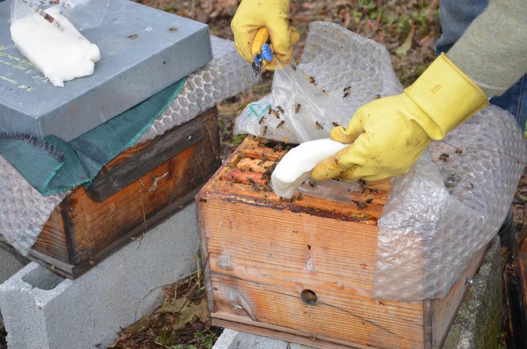 apiculture jean riondet installer une ruche lever des abeilles nourrir ses ruches lever. Black Bedroom Furniture Sets. Home Design Ideas