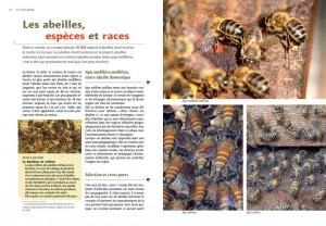 livre-apiculture-rucher-durable5