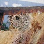92 Nid de musaraigne trouvé en mars dans une colonie très faible