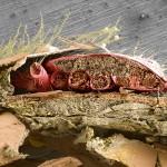 Varroa USDA_Freeze Fracture Bee & Mite PNAS cover Photo 2019