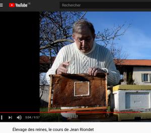 youtube-reine